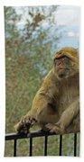 Barbary Macaque  Beach Towel