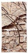 Bare Tree Adobe Wall Beach Towel by Joe Kozlowski