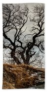Bare Tree On The Hill Beach Towel