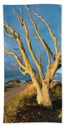 Bare Tree On The Spit Beach Towel