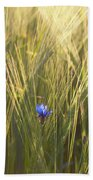 Barley And Corn Flowers In The Field Beach Sheet