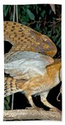 Barn Owl With Prey Beach Towel