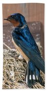 Barn Swallow At Nest Beach Towel