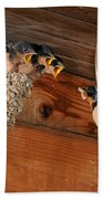 Barn Swallow Nest Beach Towel by Scott Linstead