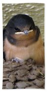 Barn Swallows 1 Beach Towel