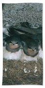 Barn Swallows Beach Towel by Hans Reinhard