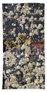 Barnacles Beach Towel