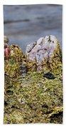 Barnacles Beach Sheet