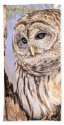Barred Owl Watch Beach Towel