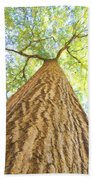 Bartrams Tree Beach Towel