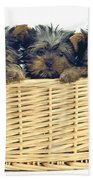Basket Of Yorkies Beach Towel