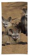 Bat-eared Fox Pups Beach Towel