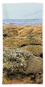 Sabellariid Worm Reef  Beach Towel