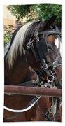 Bay Pinto Amish Buggy Horse Beach Towel
