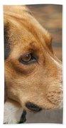 Beagle Loyalty Beach Towel