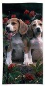 Beagles Beach Towel