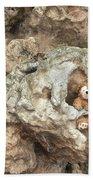Bear Cave Beach Towel