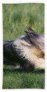 Bearded Collie Dog Beach Towel