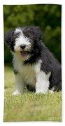 Bearded Collie Puppy Beach Towel