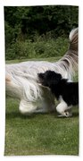 Bearded Collies Playing Beach Towel by John Daniels