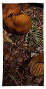 Beartooth Mountain Mushrooms   #3661 Beach Towel