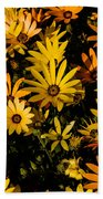 Beautiful African Daisies Beach Towel