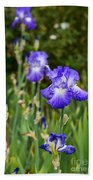 Beautiful And Colorful Iris. Beach Towel