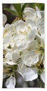 Beautiful Apple Blossoms Beach Towel