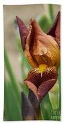 Beautiful Brown Bearded Iris Beach Towel