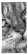Beautiful Cat Beach Towel by Olga Shvartsur