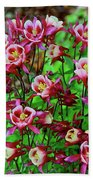 Beautiful Columbine   Beach Towel