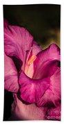 Beautiful Gladiolus Beach Towel