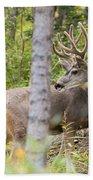 Beautiful Mule Deer Buck With Velvet Antler  Beach Towel
