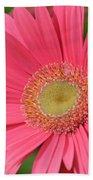 Beautiful Pink Gerber Daisies Beach Towel
