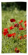 Beautiful Poppies 1 Beach Towel