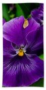 Beautiful Purple Pansies Beach Towel