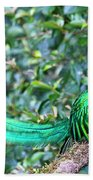 Beautiful Quetzal 3 Beach Towel