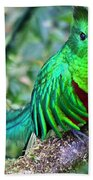 Beautiful Quetzal 4 Beach Towel by Heiko Koehrer-Wagner
