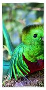 Beautiful Quetzal 5 Beach Towel