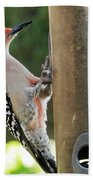 Beautiful Red Belly Woodpecker Jr Beach Sheet
