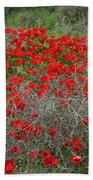 Beautiful Red Wild Anemone Flowers In A Spring Field Beach Towel