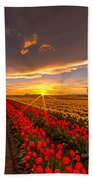 Beautiful Tulip Field Sunset Beach Towel