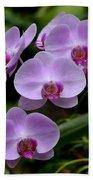 Beautiful Violet Purple Orchid Flowers Beach Towel