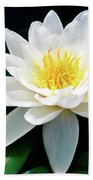 Beautiful Water Lily Capture Beach Towel