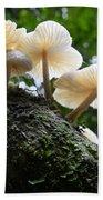 Beauty Of Mushrooms Argentina Beach Towel