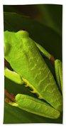 Beauty Of Tree Frogs Costa Rica 6 Beach Towel