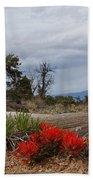 Beauty On 25 Mesa Panoramic Beach Towel