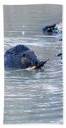 Beaver Chews On Stick Beach Towel