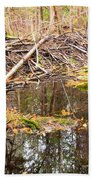 Beaver Dam In Fall Colored Forest Wetland Swamp Beach Towel