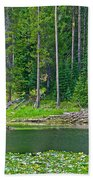 Beaver Dam In Heron Pond In Grand Teton National Park-wyoming Beach Towel